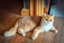 Cute orange cat sitting on the floor in the room