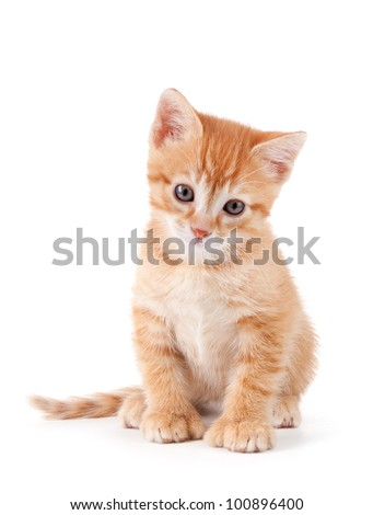 Cute orange kitten with large paws on a white background.