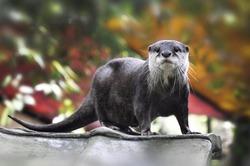 cute otter in the garden