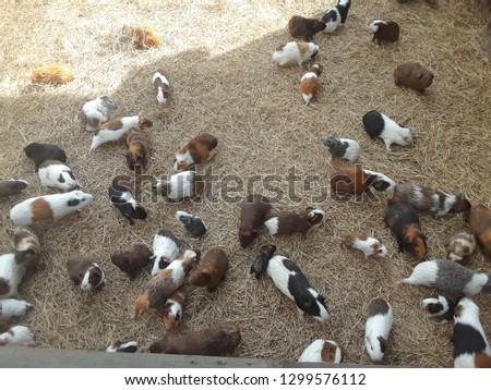 Cute Outdoor gerbils