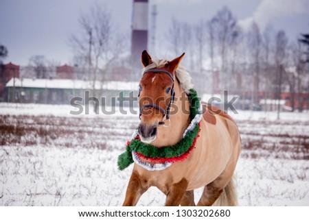 Cute palomino horse portrait in winter scenery #1303202680