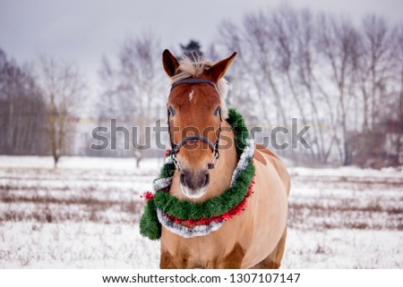 Cute palomino horse portrait in winter scenery #1307107147