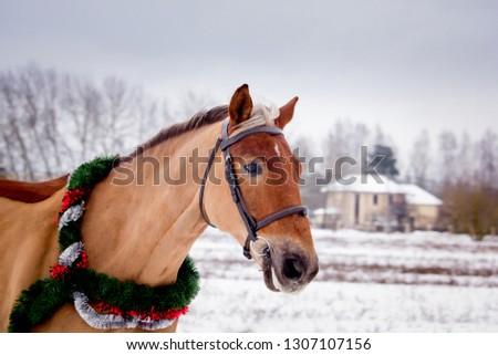 Cute palomino horse portrait in winter scenery #1307107156