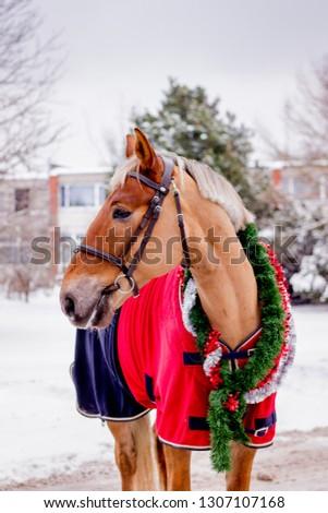 Cute palomino horse portrait in winter scenery #1307107168