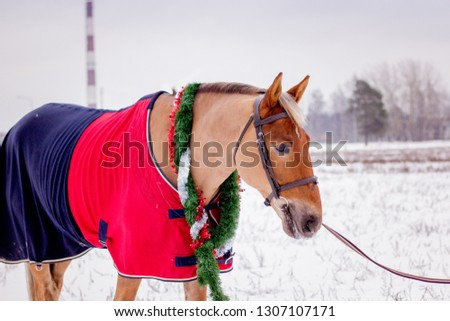 Cute palomino horse portrait in winter scenery #1307107171