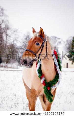 Cute palomino horse portrait in winter scenery #1307107174