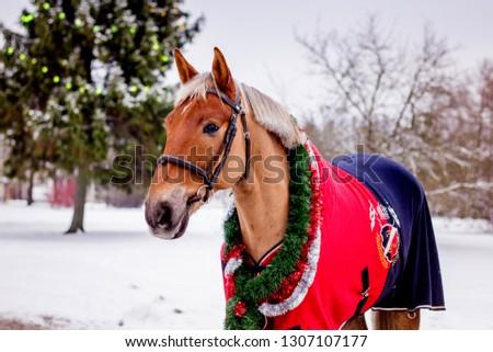 Cute palomino horse portrait in winter scenery #1307107177