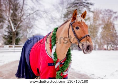 Cute palomino horse portrait in winter scenery #1307107180