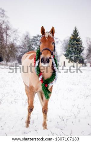 Cute palomino horse portrait in winter scenery #1307107183