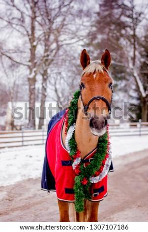 Cute palomino horse portrait in winter scenery #1307107186
