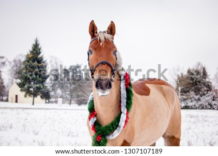 Cute palomino horse portrait in winter scenery #1307107189
