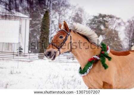 Cute palomino horse portrait in winter scenery #1307107207