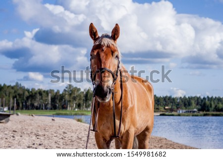 Cute palomino horse portrait on the beach in summer #1549981682