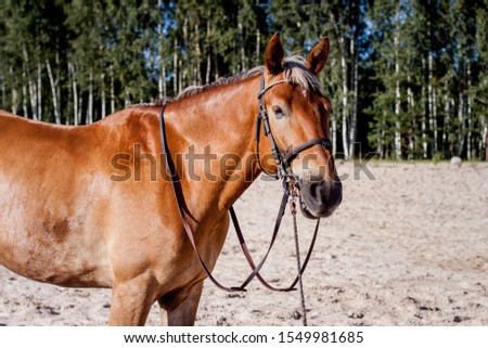 Cute palomino horse portrait on the beach in summer #1549981685