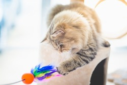 Cute persian cat playing toy on cat tower