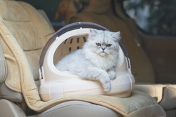 Cute persian cat  sitting in a travel box