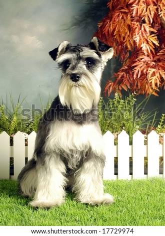 Cute Pet Animal #17729974