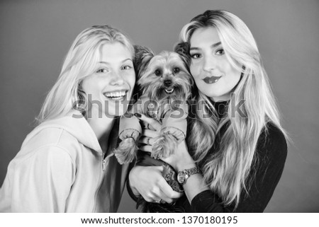 Cute pet dog. Yorkshire Terrier breed loves socialization. Blonde girls adore little cute dog. Women hug yorkshire terrier. Yorkshire terrier is very affectionate loving dog that craves attention.