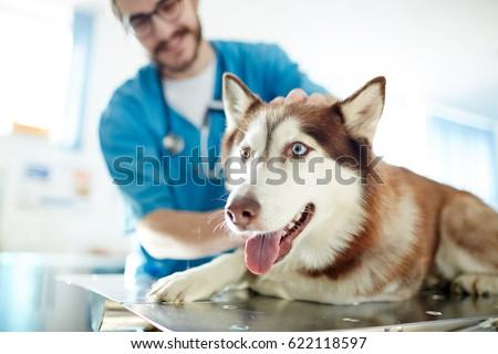Cute pet lying on table in vet clinic