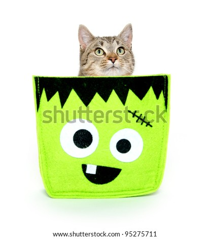 Cute pet tabby cat sitting in Halloween bag on white background