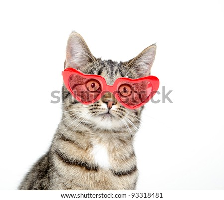 Cute pet tabby cat sitting with heart sunglasses on white background