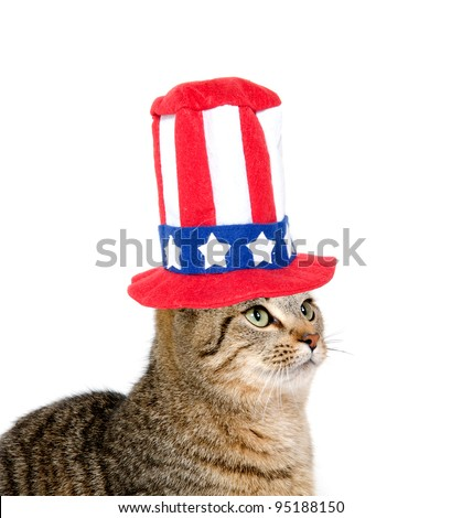 Cute pet tabby cat with Fourth of July hat sitting on white background