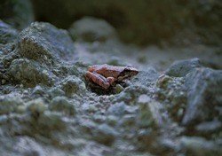 Cute pink tiny frog in a cold and dark cave