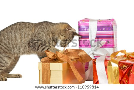Cute playful cat inspecting decorative Christmas presents with ornamental bows isolated on white
