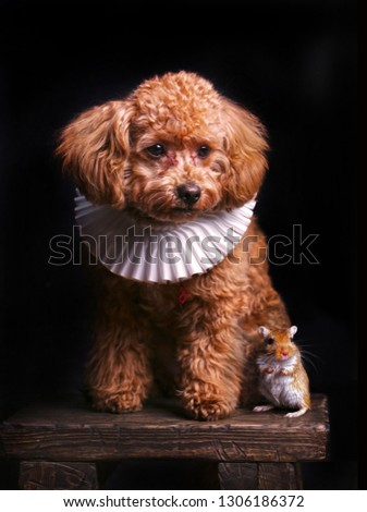 Cute Portrait of Poodle Dog and Gerbil