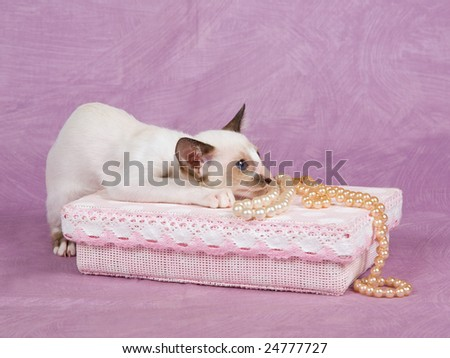 Cute pretty Oriental Siamese kitten on pink background with pink gift box and pearls