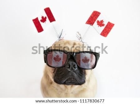 Cute pug dog wearing Canadian Flag sunglasses and flags on headband for Canada Day #1117830677