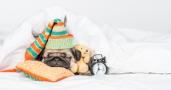 Cute Pug puppy hugs favorite toy bear and sleeps near alarm clock on a  pillow under white blanket at home. Empty space for text