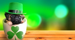 Cute pug puppy inside a mug wearing a leprechaun hat. Saint Patrick's Day theme concept.