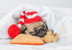 Cute Pug puppy sleeps on pillow hugs favorite toy bear and sleeps under white blanket at home