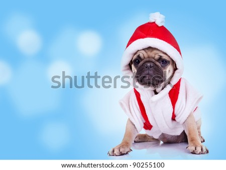 cute pug puppy wearing a santa claus costume on a nice background