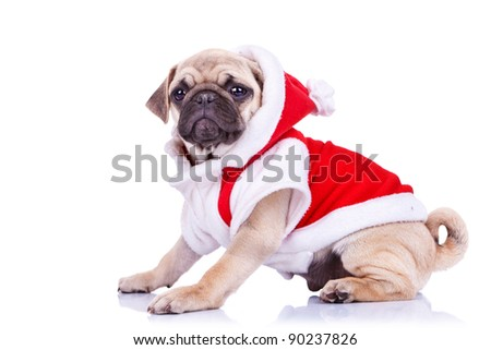 cute pug puppy wearing a santa claus costume on white background - side view