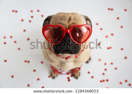 Cute pug wearing heart shaped sunglasses and surrounded by hearts  #1284368053