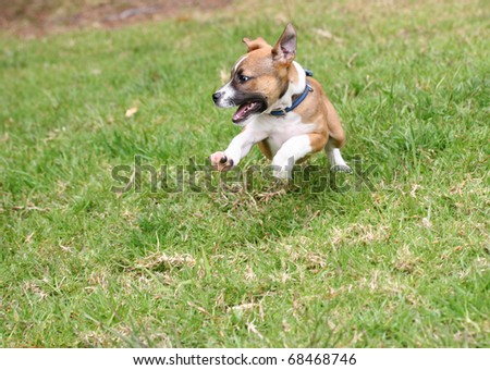 Cute pup playing, front feet off the ground