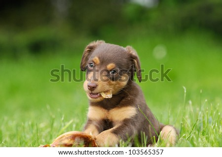 cute puppie dog 8 weeks with bone