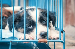 Cute puppies in a cage at an animal shelter. Dog shelter.