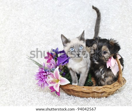 Cute puppy and kitten sitting in a basket together with spring flowers on a white background.