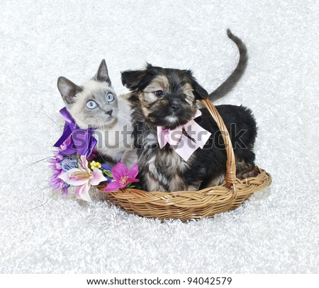 cute puppy and kitten sitting in a basket together with