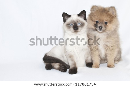 Cute puppy and kitten sitting together on a white background.