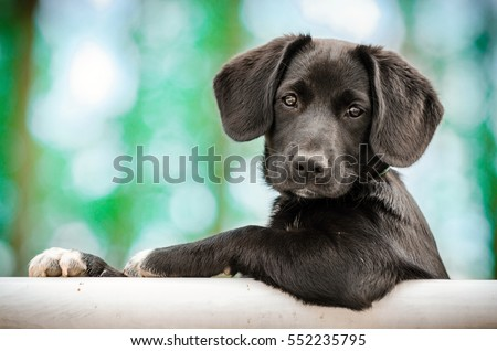 Photo of  cute puppy as a model