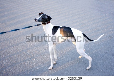 cute puppy dog doggy cutie on a leash