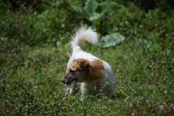 Cute puppy dog on the green forest, very cute hunting dog, very beautiful hunting pet puppy dog