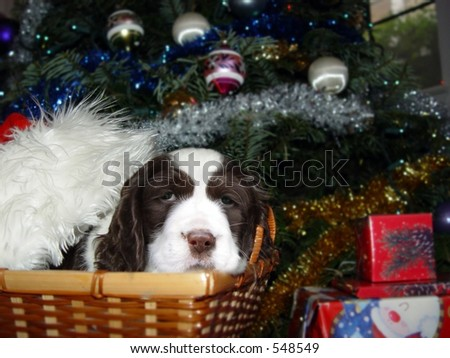 Cute puppy in a basket under Christmas tree