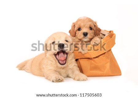 Cute Puppy in brown bag on white background