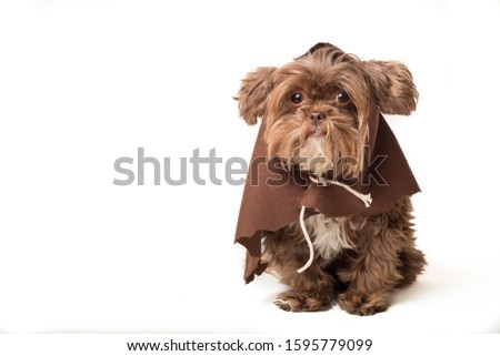 Cute puppy in brown robe