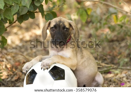 Cute puppy is a big eyed adorable puppy with floppy ears looking curious while resting on a ball outdoors.